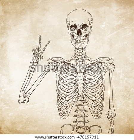 human skeleton posing over old