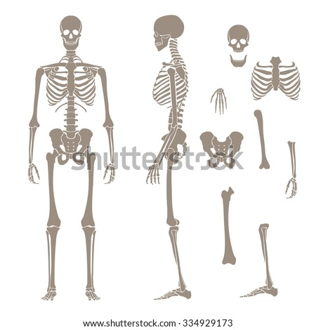 Human skeleton silhouette stock photo