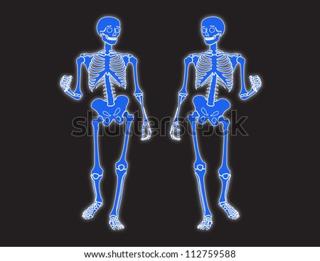 Human skeleton. Vector - stock vector