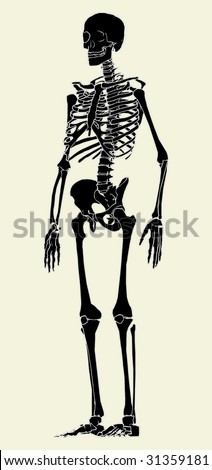 Human Skeleton Vector 03