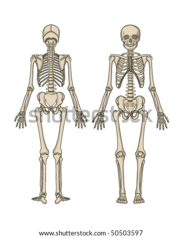 skoyoofel human skeleton cartoon. Black Bedroom Furniture Sets. Home Design Ideas
