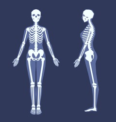 Human skeleton with a silhouette of a body. Front view, side view in full length. Simplified anatomical image. Vector illustration on a dark blue background.