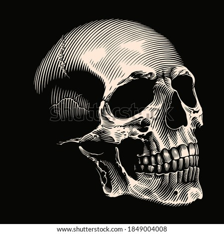 Human skull. Hand drawn engraving. Editable vector vintage illustration. Isolated on black background. 8 EPS