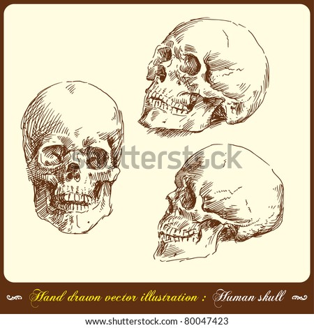 human skull - hand drawn vector illustration