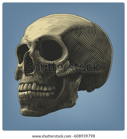 human skull in engraving style
