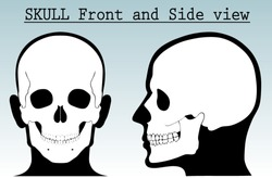 human skull with silhouette head /front and side view/ vector illustration