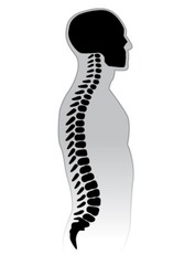 Human Spine. Black and white illustration.