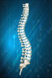 Human spine diagram on blue illustration