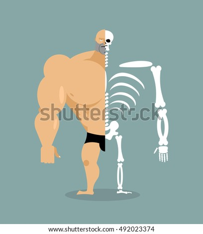 human structure skeleton men