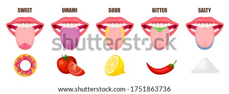 Human tongue basic taste areas. Five taste zones in a mouth - sweet, salty, sour, bitter and umami. Educational, schematic vector illustration isolated on white background.