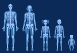 Human woman, man, girl, boy and baby skeleton anatomy in front on x ray view. Vector isolated flat illustration of skull and bones in female and male body. Medical, educational or science banner.