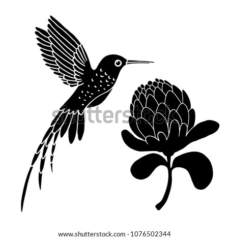 Hummingbird and flower. Hand drawn black silhouettes isolated on white background set