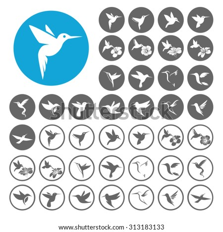 hummingbird icons set