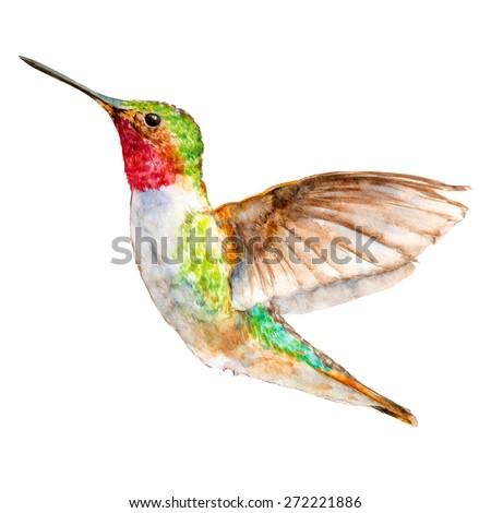hummingbird isolated on white
