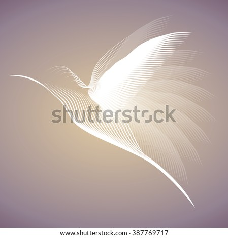 hummingbird white lines