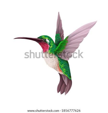 Hummingbirds isolated. Trendy vector print. Stock photo ©