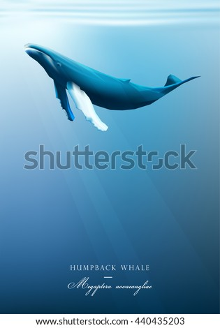 humpback whale swimming under