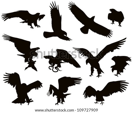 Hunting eagle detailed vector silhouettes set - stock vector