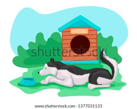 husky breed dog is lying on the