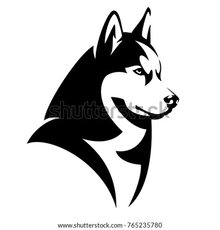 husky dog black and white