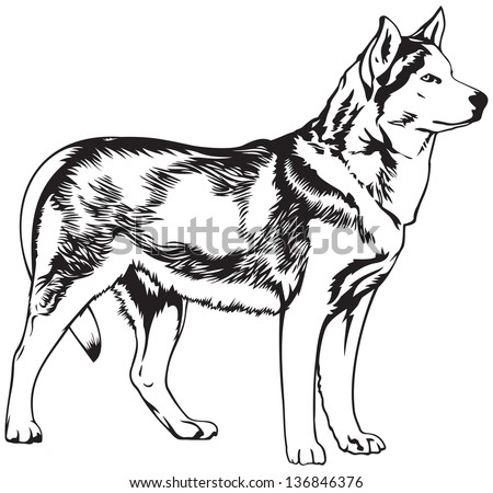 husky dog breed vector