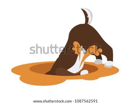 Husky dog digs wide deep hole in sand