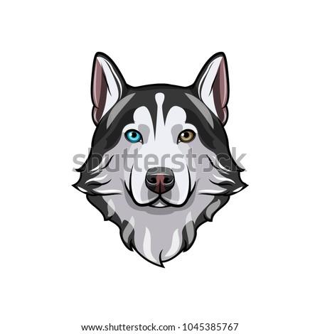 husky dog portrait husky head