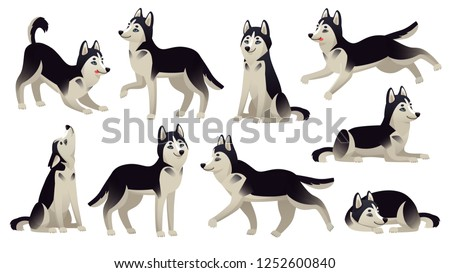 husky dog poses cartoon