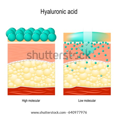 Shutterstock Hyaluronic acid. Hyaluronic acid in skin-care products. Low molecular and High molecular. Difference