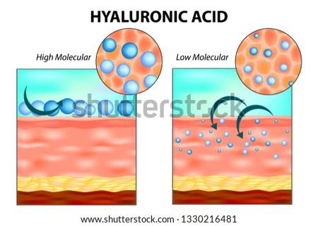 Hyaluronic acid in skin. Low molecular and High molecular.