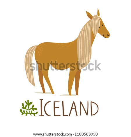 iceland nature animals horse