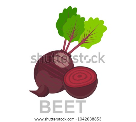 icon Beet whole and in section. vector sugar Beet illustration isolated - healthy vegetable, nutrition icon - veggie food, vector beetroot