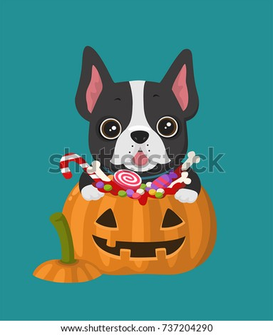 Stock Photo Icon dog breed French Bulldog. Puppy is sitting in a Halloween pumpkin with sweets.