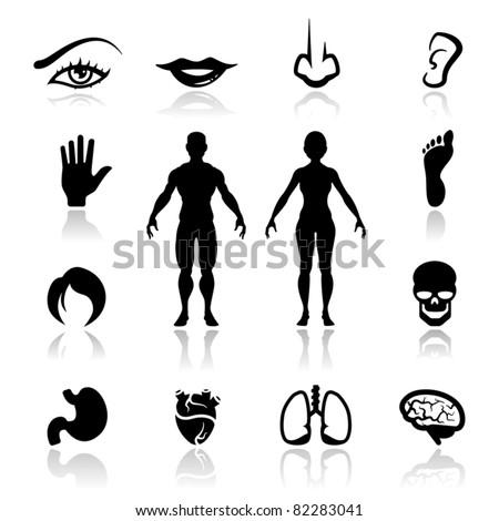 Icons set human organs