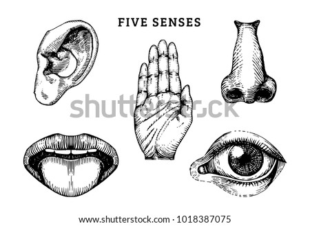 Icons set of five human senses in engraved style. Vector illustration of sensory organs.