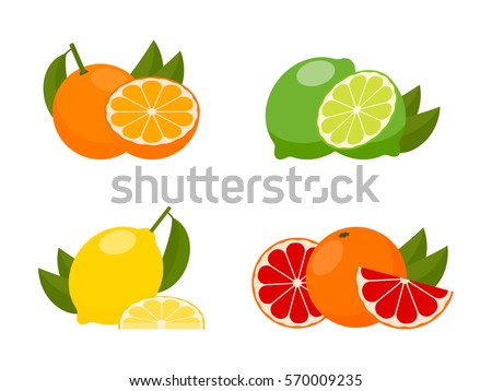icons vector citrus fruits ...