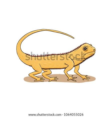 iguana lizard hand drawn
