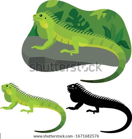 iguana lizard lies on a stone