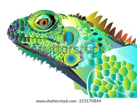 iguana portrait vector color