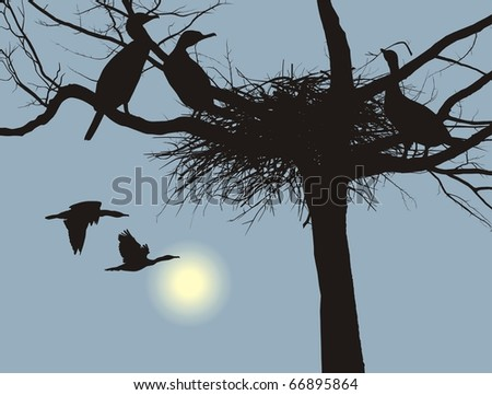 illustration cormorants nest in the dry tree