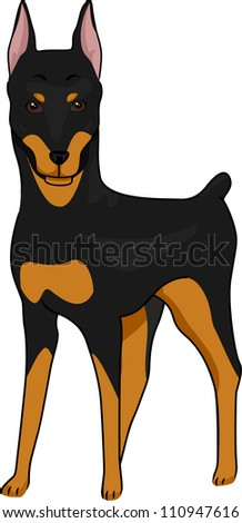 Illustration Featuring a Tall and Alert Doberman Pinscher