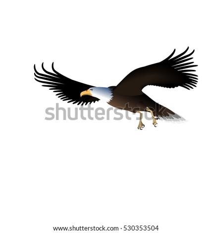 illustration flying eagle