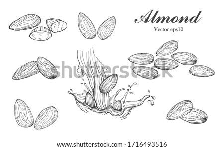 Illustration hand drawn sketch  Set Almond seeds and almond milk, on white background, outline monochrome ink style for artwork, logo, packaging vector eps10. Сток-фото ©