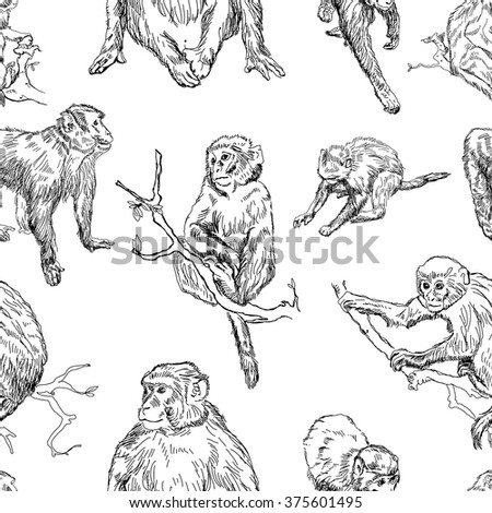 Realistic Monkey Outline