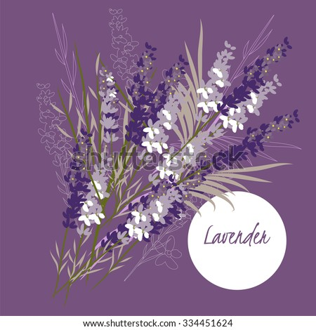 illustration lavender flower