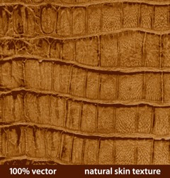 illustration. natural skin textures