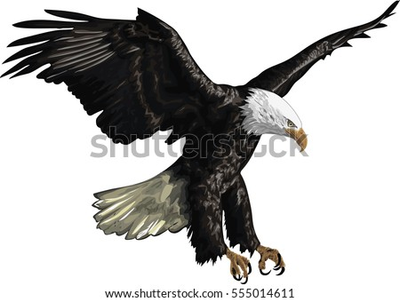 Illustration of a Bald Eagle isolated on a white background,  Vector art