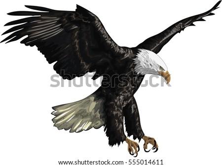 illustration of a bald eagle
