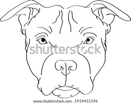 illustration of a bull terrier