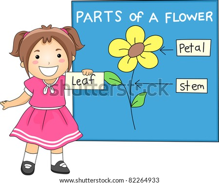 Illustration of a Girl Identifying the Parts of a Flower